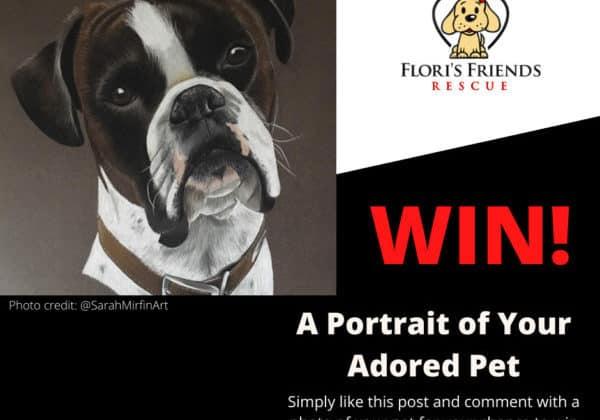 Pet Portrait competition FB (1)